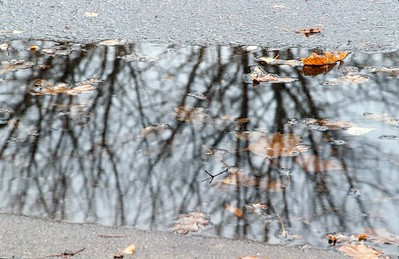 Corvallis_Autumn_Reflection