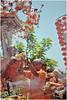 G3K_Thaipusam119 copy