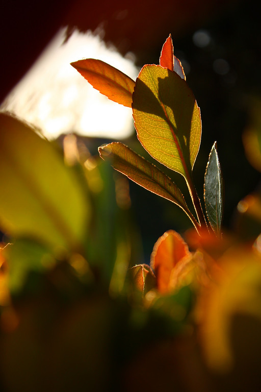 Leaf Surveillance