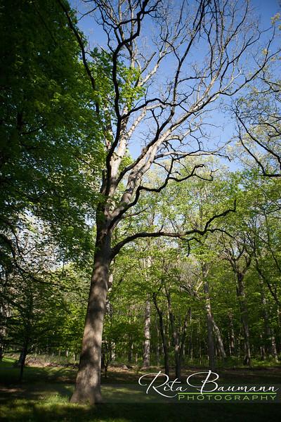 Greenfield Park_May_2015_0060