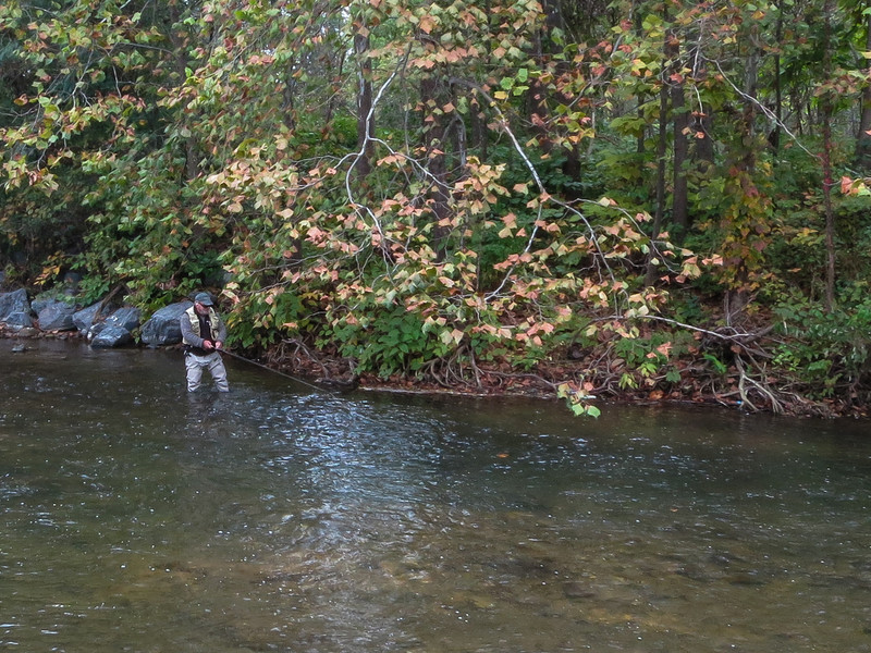 South River Delayed Harvest Section