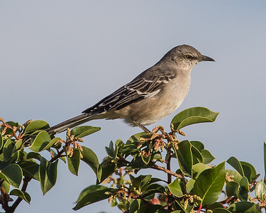 Yet another simple mocking bird.