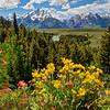 Grand Teton with Wildflowers