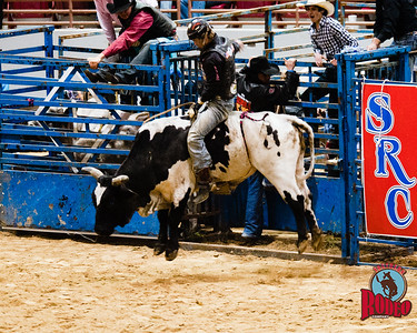 Bulls - Southern Rodeo Company