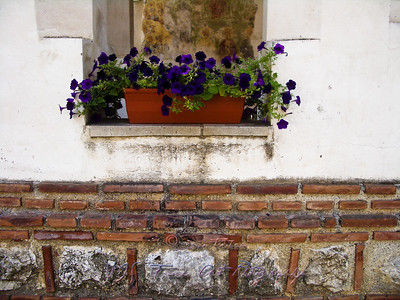 Window flowers, Arnota Monastery, Romania.