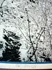 Winter Vacancy by O. E. Romig, pencil signed O. E. Romig silver print