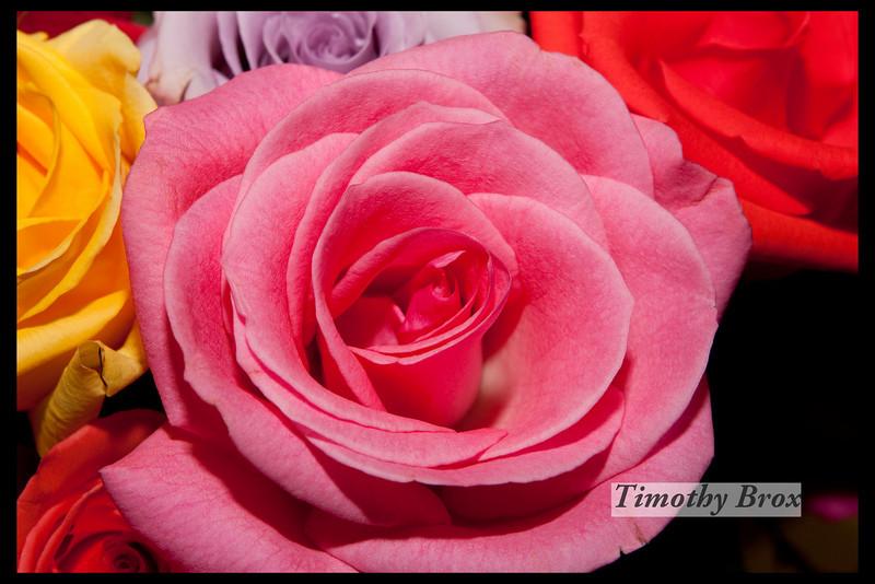 Rose Macros-0870