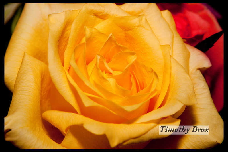 Rose Macros-0880