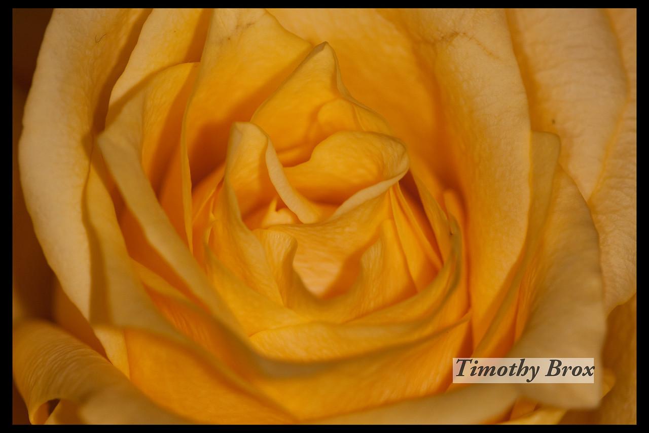 Rose Macros-0856