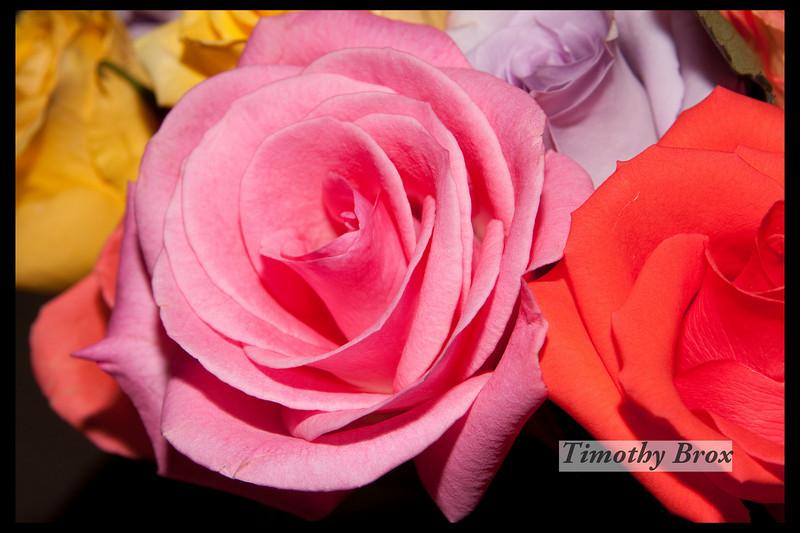 Rose Macros-0875