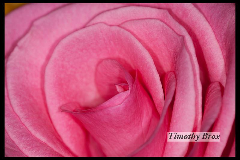 Rose Macros-0861