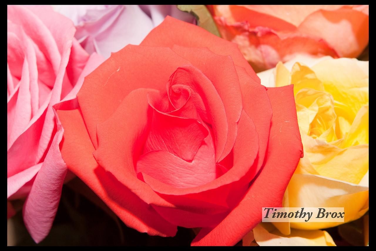 Rose Macros-0869