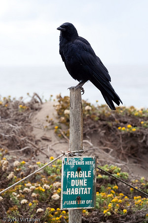 Fragile Dune Habitat - Route 1, CA, USA