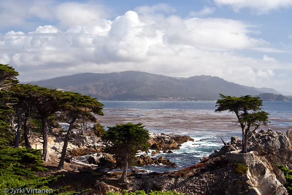 Cypress Trees along 17 Mile Drive - Monterey, CA, USA