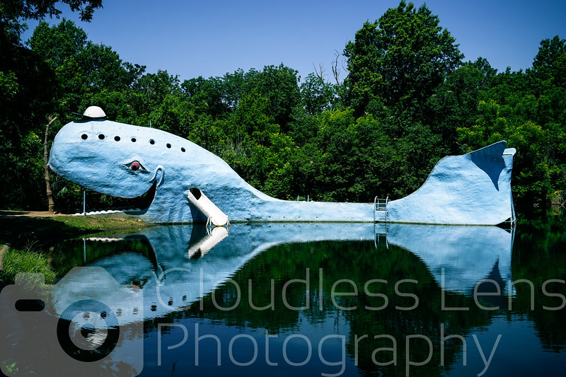 The Blue Whale in Summer