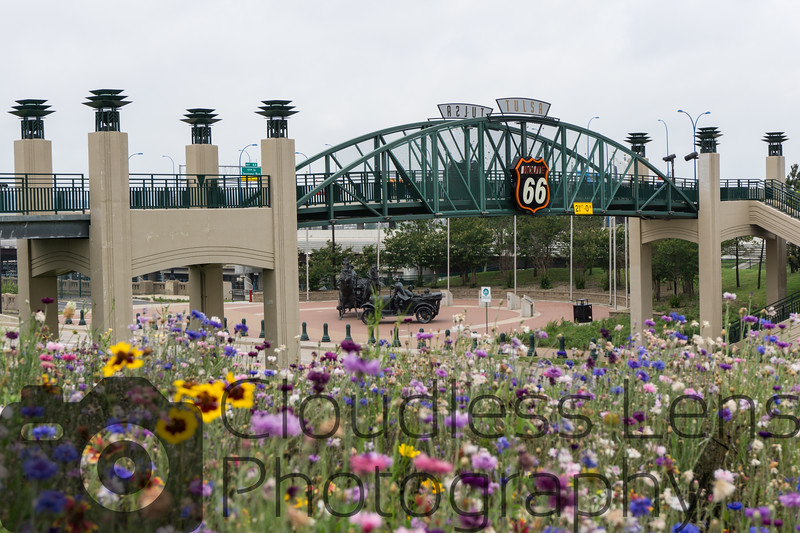 Cyrus Avery Plaza Wildflowers