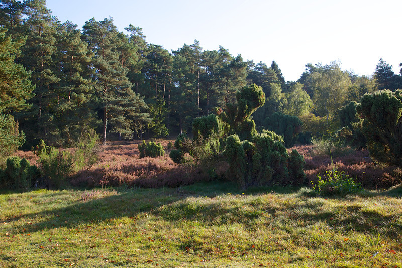 Waldklinik Jesteburg