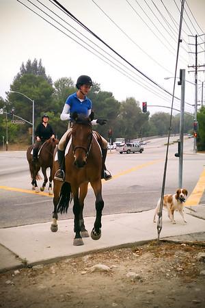 Dog walking from horseback