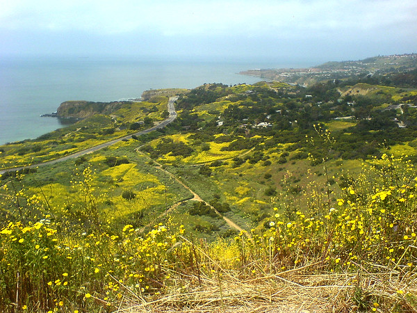 From here, Burma Road overlooks Palos Verdes Drive West as it twists through Portuguese Bend...