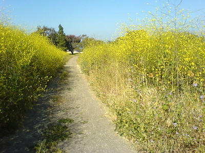 Like Burma Road, the trails are now flanked by tall wild flowers