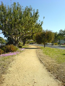 The path breaks once in Lunada Bay, but continues on past Palos Verdes High School's cross country course