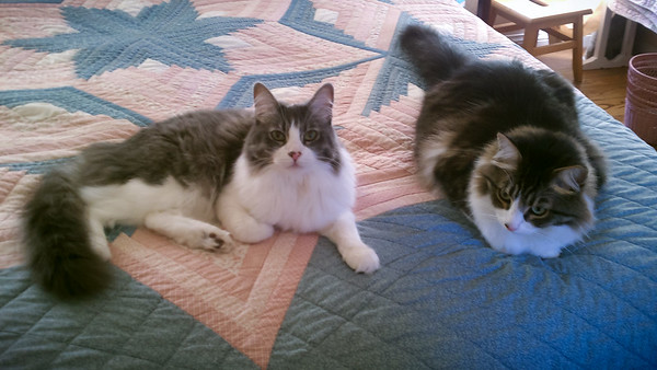 AUGUST - I've run down to mom's to take care of Annie and Cisco