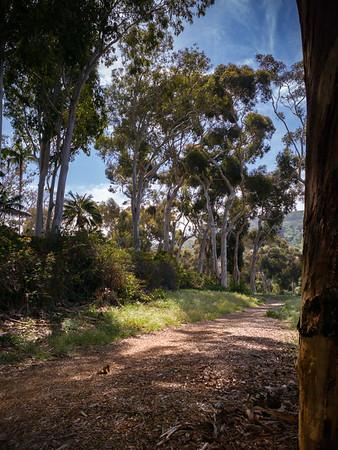 The trail that overlooks Palos Verdes Blvd