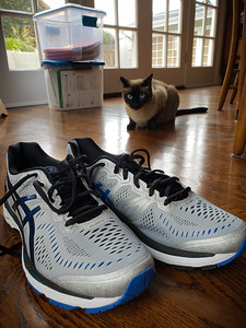APRIL - It is time to break in a new pair of running shoes.  Sorry, Moka!