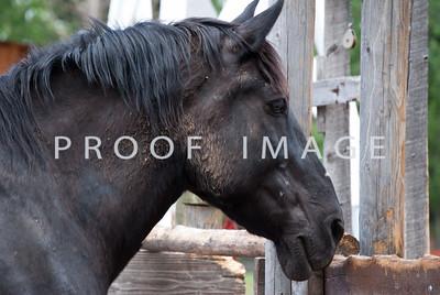 Horse - Four Mile Historic Park
