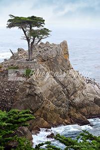 Lone Cypress - Pebble Beach, California