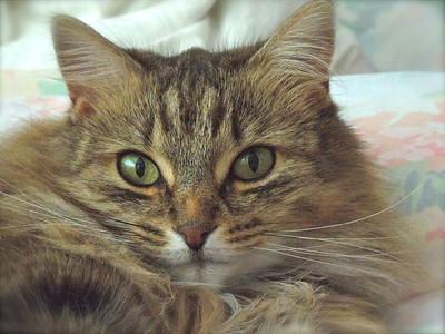 S8200 Pet Mode - edge blurring in iPhoto