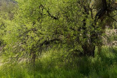 Lush desert foliage.