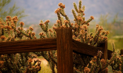 CHOLLA and fence.