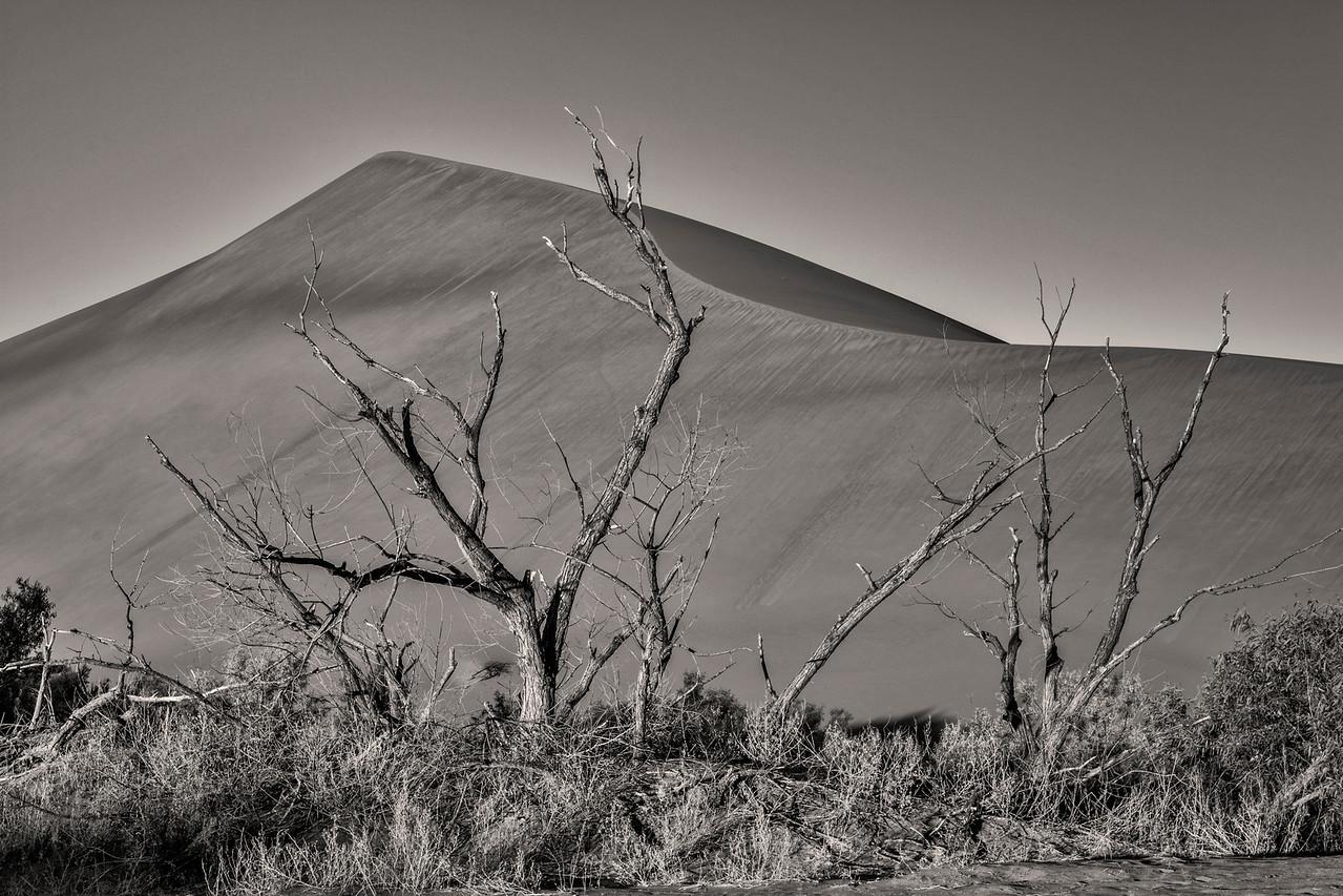 Large sand dune and tree sunrise