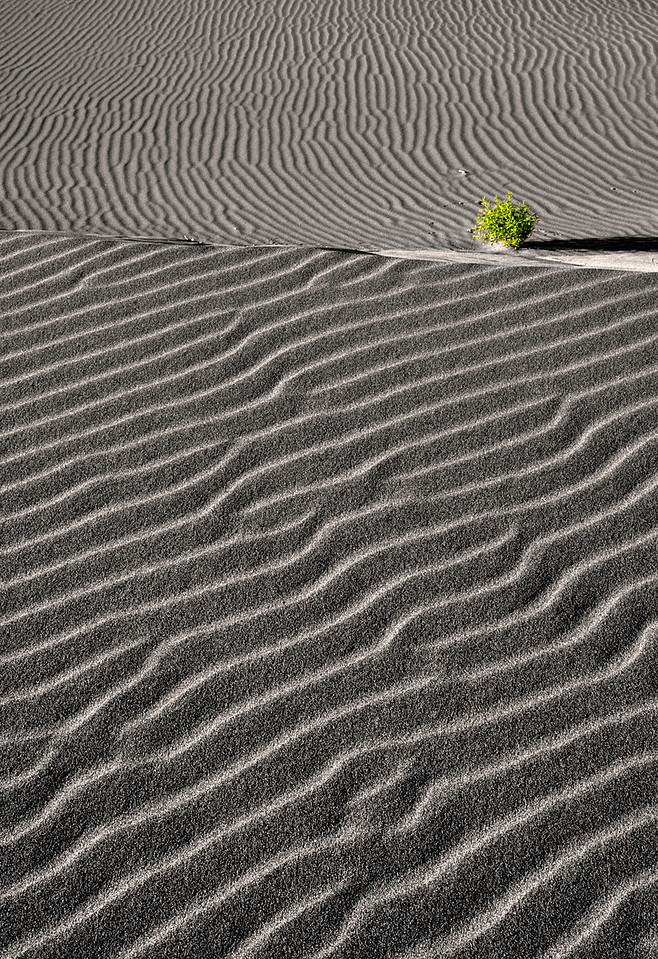 Sand dune ripples and a green bush