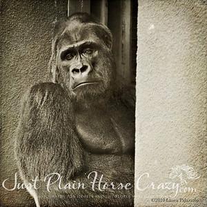 Oscar Jonesy - Gorilla