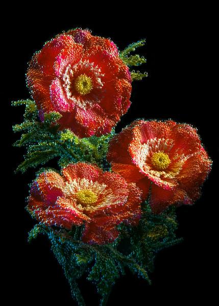 """""""Bubbly Roses #2"""""""