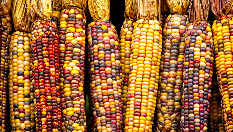 """Indian Corn Harvest"""