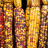 """Indian Corn Harvest"""