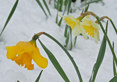 Flowers and snow, a beautiful combination