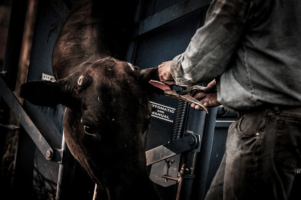 BP_2012-SO_Ranch-Cowboys-3393