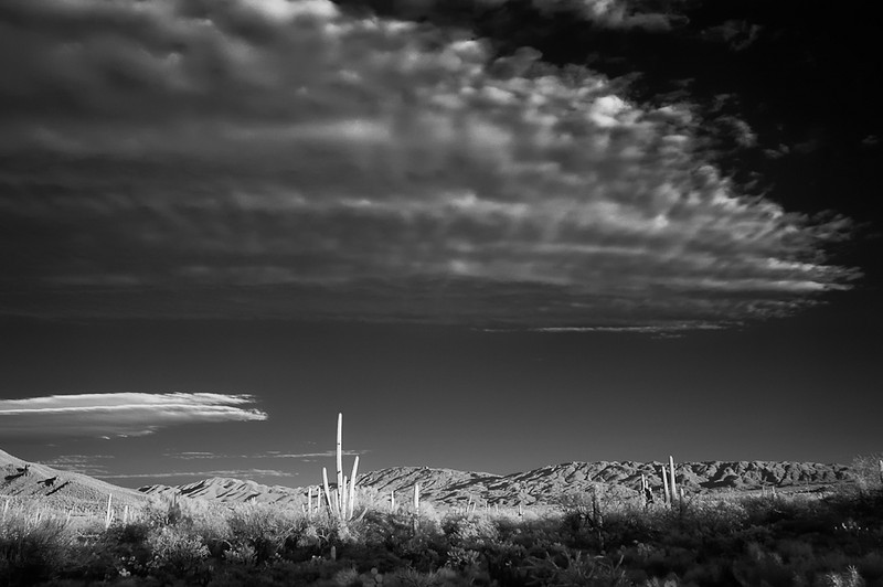 Clouds and Cactus