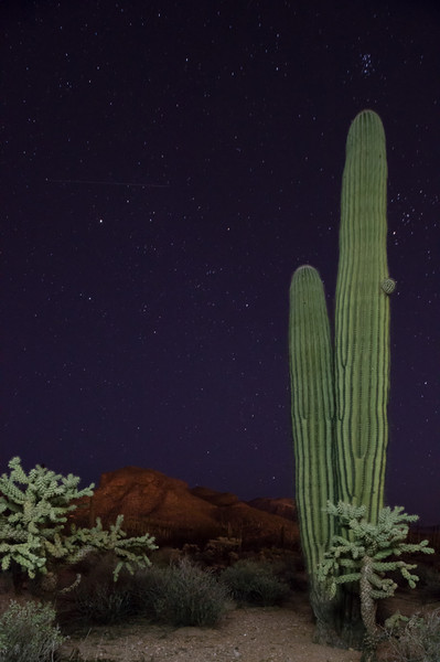 Shooting Star Pleiades Saguaro Cholla