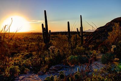 Sunset on the Saguaro Desert