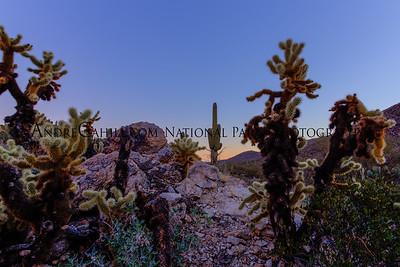 Sunrise in Saguaro National Park