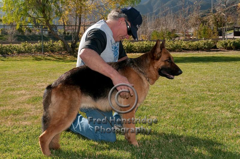 German Shepherd with Handler