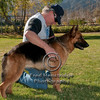 German Shepherd with Handler