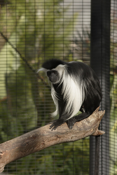 San Diego Zoo 012006_009