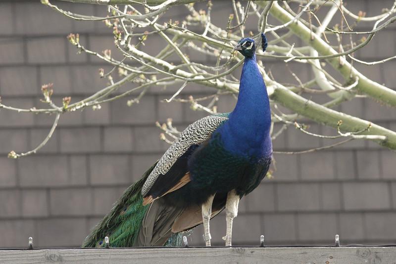 San Diego Zoo 012006_005