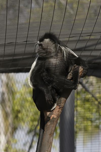San Diego Zoo 012006_008